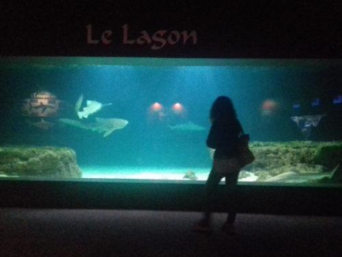 AECS aquarium 2017